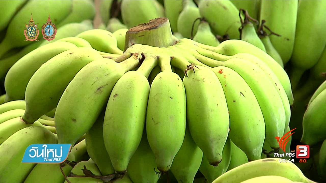 วันใหม่  ไทยพีบีเอส - เรื่องกล้วย กล้วย ช่วยสุขภาพดี