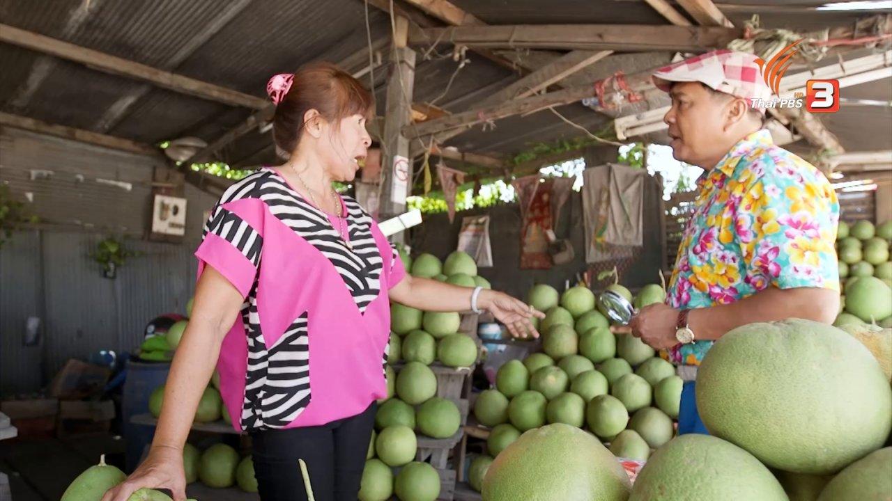 วันใหม่  ไทยพีบีเอส - สำรวจราคาส้มโอนครชัยศรี