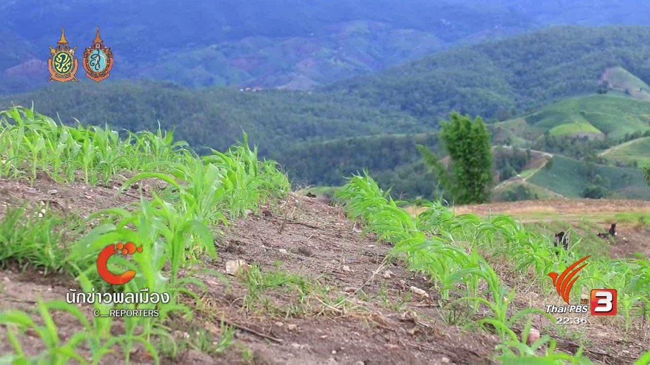 ที่นี่ Thai PBS - นักข่าวพลเมือง : แม่แจ่มโมเดล พลิกฟื้นผืนป่าด้วยความร่วมมือ