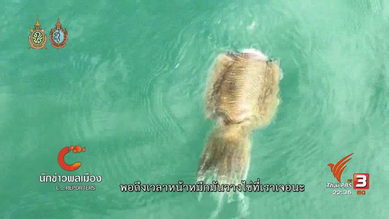 ที่นี่ Thai PBS - นักข่าวพลเมือง : ชุมชนชาวประมงพื้นบ้านที่จังหวัดเพชรบุรีช่วยกันเพาะขยายพันธุ์สัตว์ทะเล