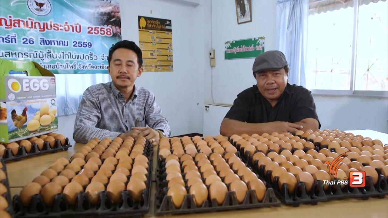 วันใหม่  ไทยพีบีเอส - สายสืบเจาะตลาด : สืบราคาไข่ไก่