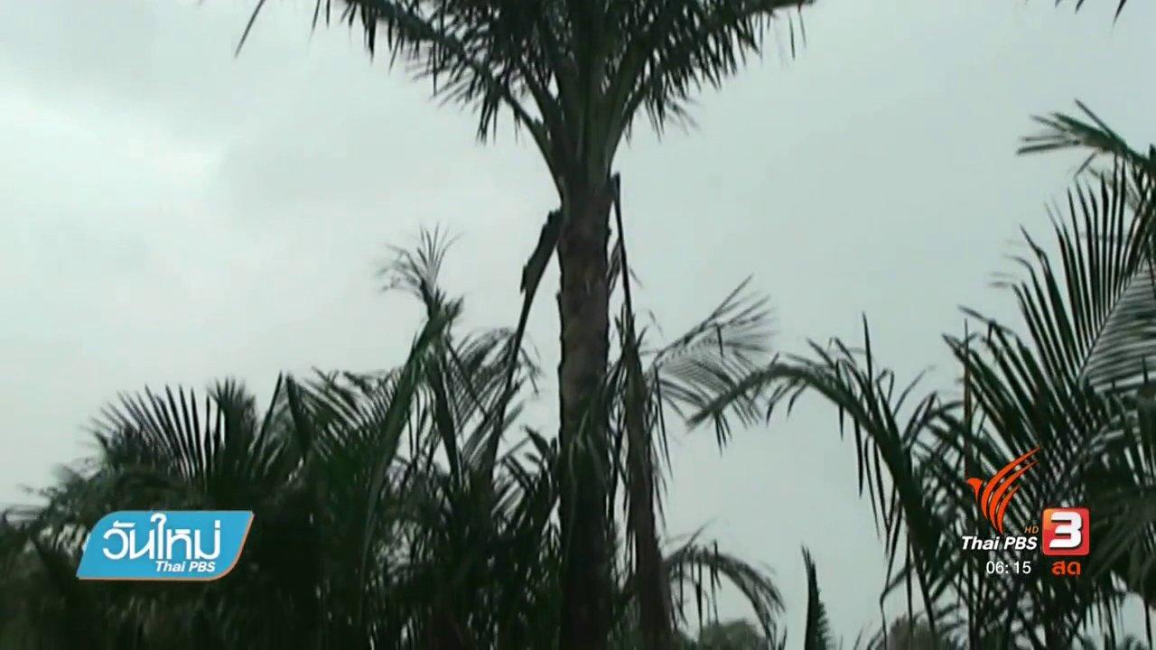 วันใหม่  ไทยพีบีเอส - ชาวนาโยงอนุรักษ์ต้นสาคูไม้พื้นถิ่นภาคใต้