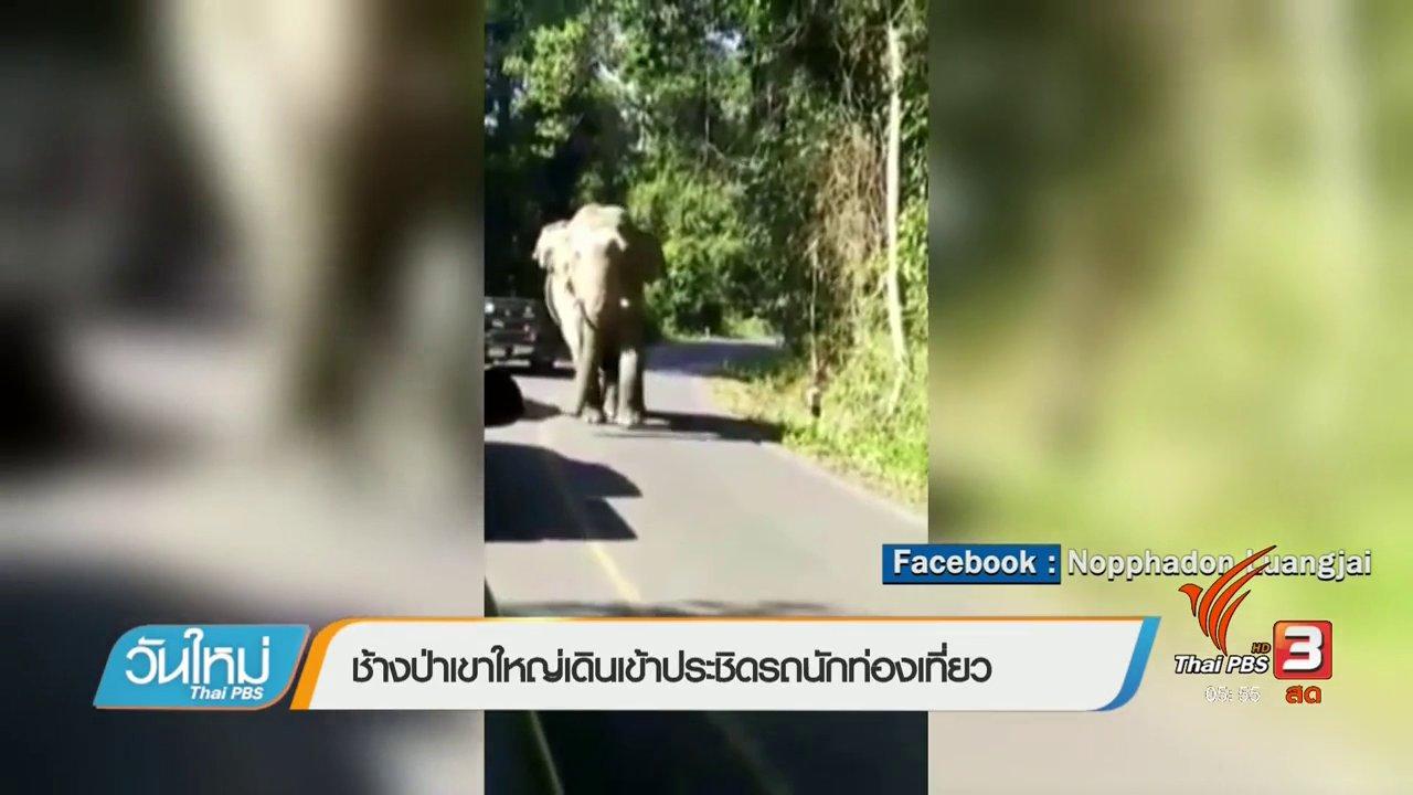 วันใหม่  ไทยพีบีเอส - ช้างป่าเขาใหญ่เดินเข้าประชิดรถนักท่องเที่ยว