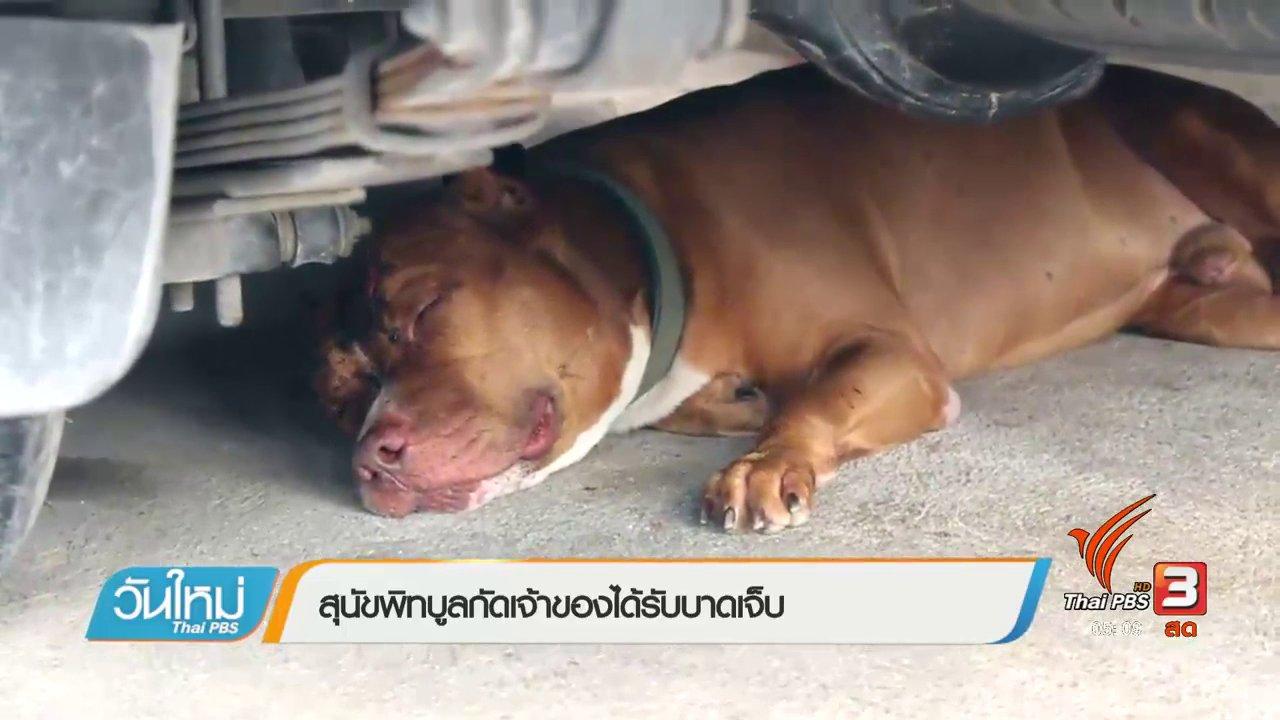 วันใหม่  ไทยพีบีเอส - สุนัขพิบูลกัดเจ้าของได้รับบาดเจ็บ