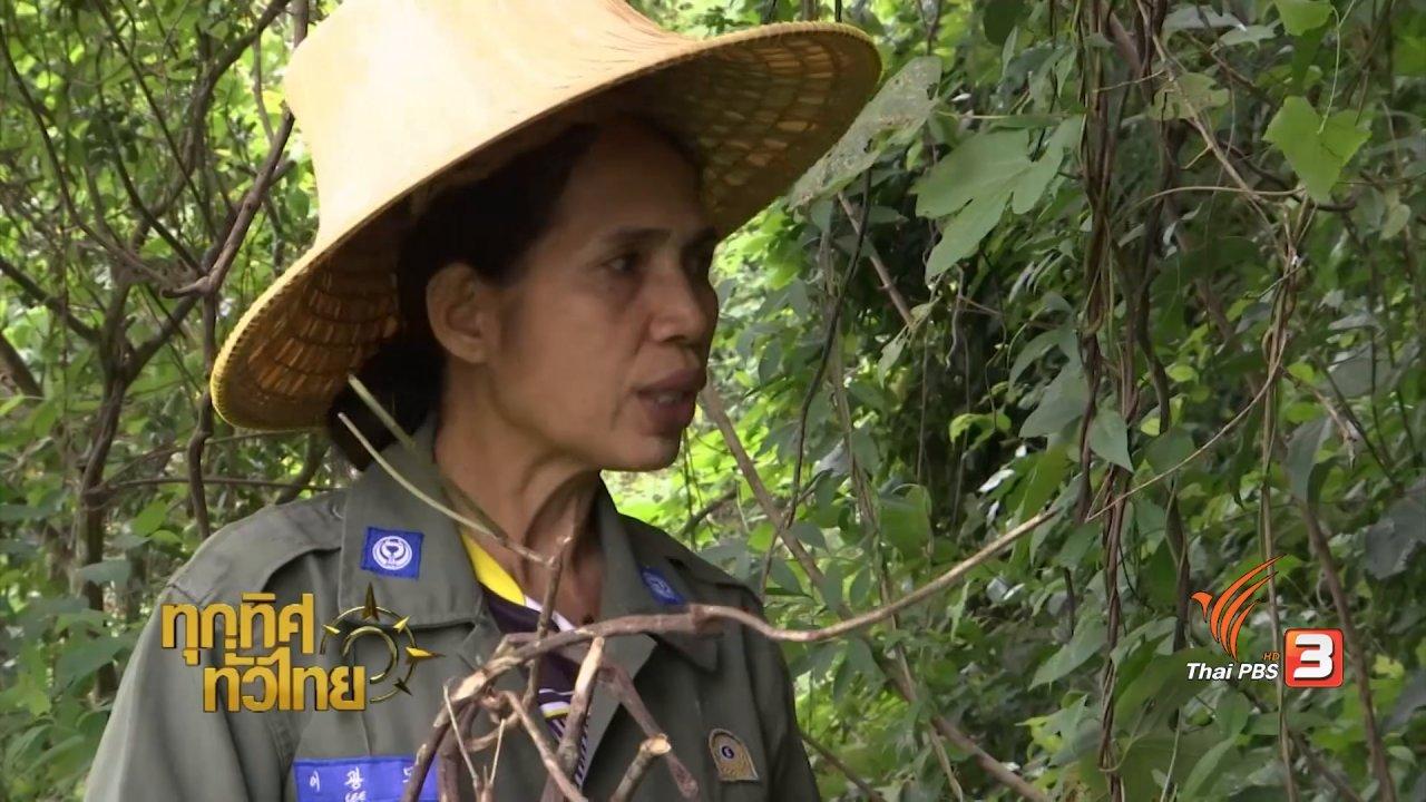ทุกทิศทั่วไทย - จุฑามาศ พาตะลุย : ข้าวโป่งรากเครือตดหมา