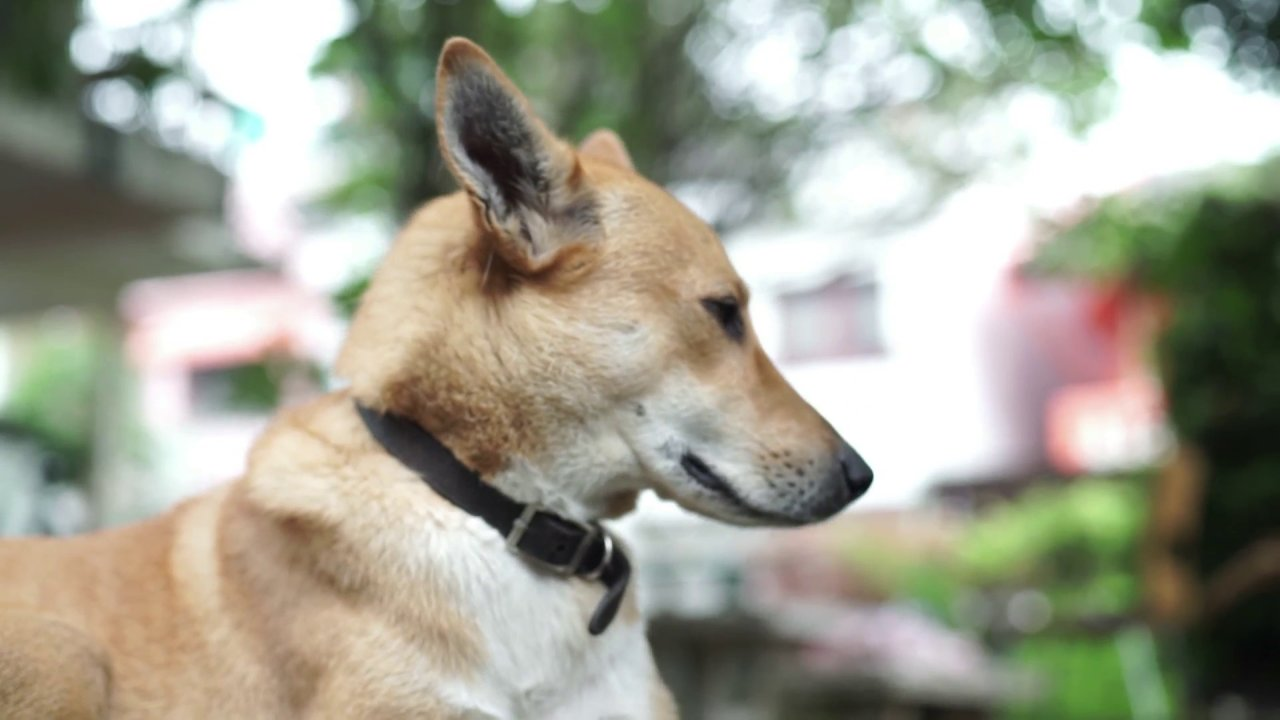 Heart work - ทำไมถึงรักสุนัขจรจัด