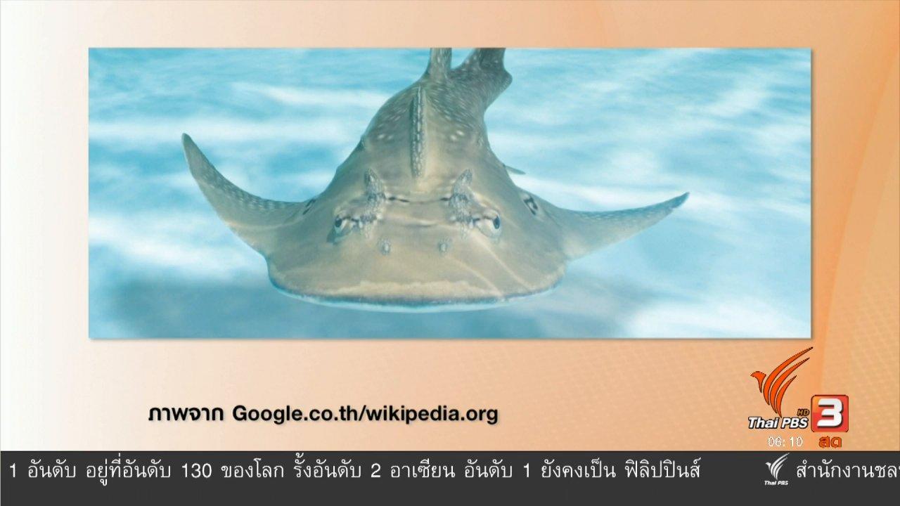 วันใหม่  ไทยพีบีเอส - ฉลามโรนินวางขายตลาตเพราะไม่มีกฎหมายคุ้มครอง