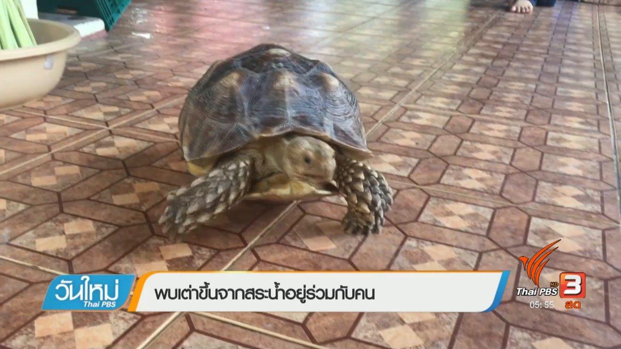 วันใหม่  ไทยพีบีเอส - พบเต่าขึ้นจากสระน้ำอยู่ร่วมกับคน