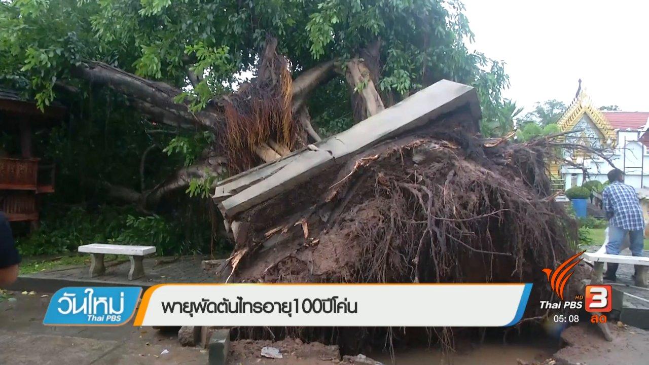 วันใหม่  ไทยพีบีเอส - พายุพัดต้นไทรอายุ 100 ปี โค่น