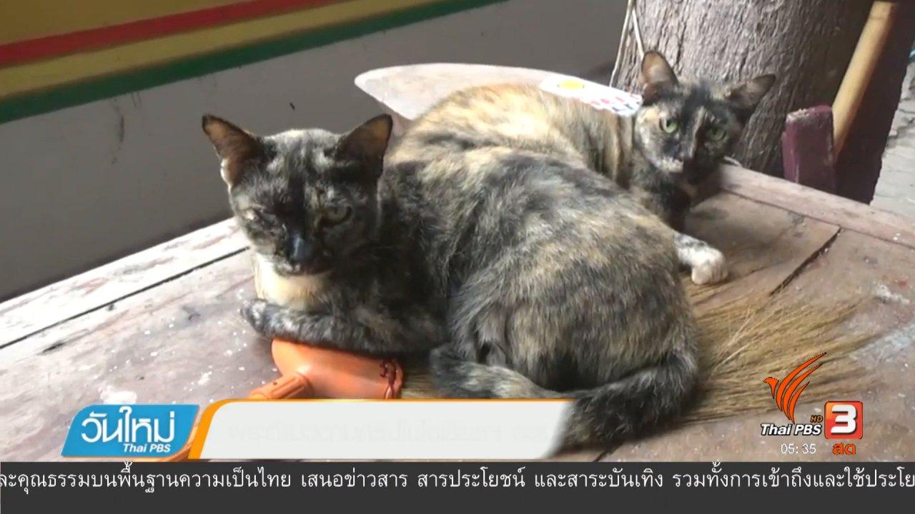 วันใหม่  ไทยพีบีเอส - พระตีแมวตามคลิปในโซเชียลฯ ยอมรับลงโทษแมวจริง
