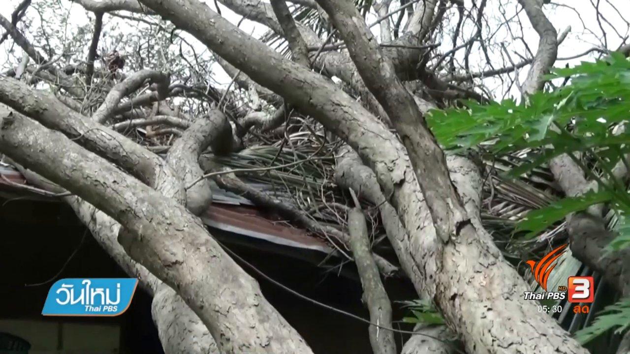 วันใหม่  ไทยพีบีเอส - ร้องเรียนหน่วยงานรัฐเร่งย้ายไม้พะยูงล้มทับบ้าน