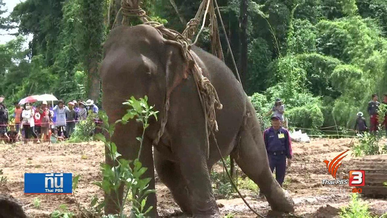 ที่นี่ Thai PBS - ช้างป่าถูกน้ำพัดอาการยังน่าห่วง