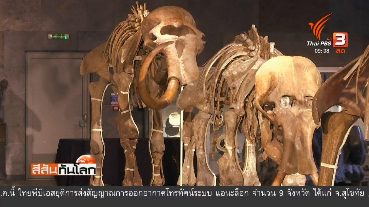 สีสันทันโลก - ประมูลครอบครัวช้างแมมมอธ
